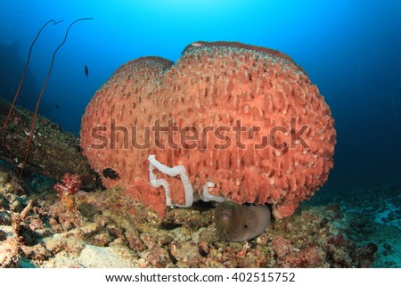 Barrel Sponge and Moray Eel on coral reef - stock photo
