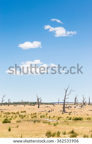 Barren landscape with crows in dead trees, north east Tasmania, Australia - stock photo