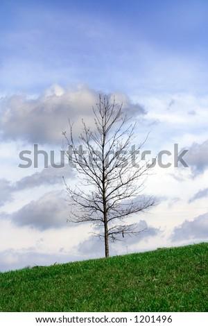 barren tree - stock photo