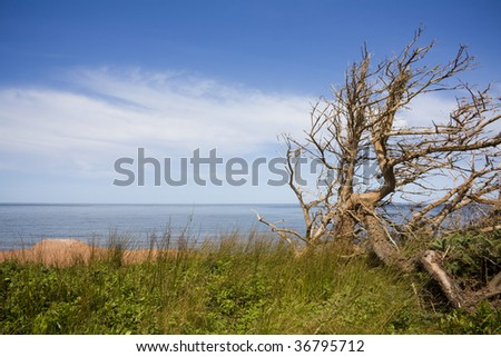 Barren tree and ocean shot in PEI, Canada