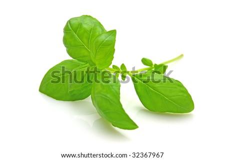 Basil - stock photo