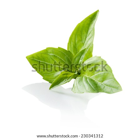 Basil central rosette leaves close-up isolated on white background  - stock photo