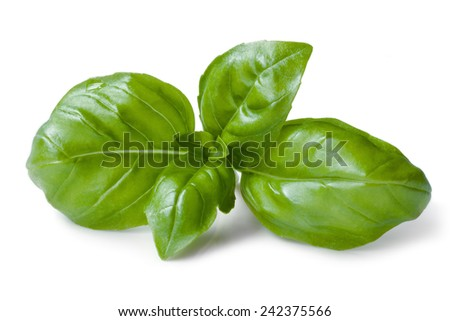 Basil isolated on white background. - stock photo