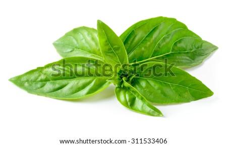 Basil isolated on white background - stock photo