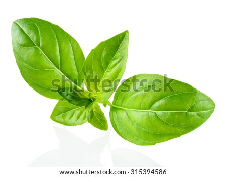 Basil isolated on white background - stock photo