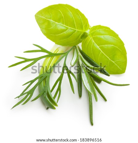 Basil leaves, dill herb, rosemary spice isolated on white background. - stock photo