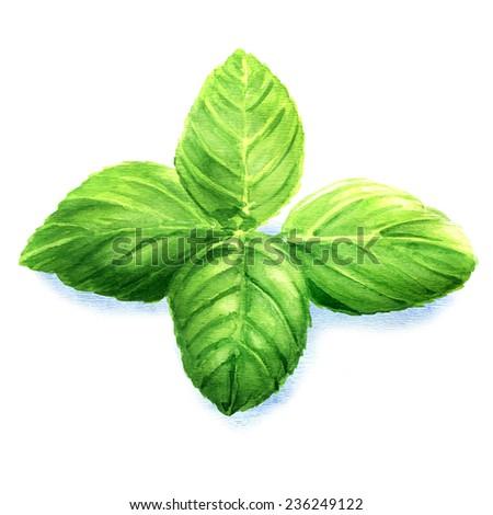 basil leaves isolated - stock photo