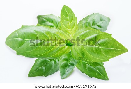 Basil leaves isolated on the white background.