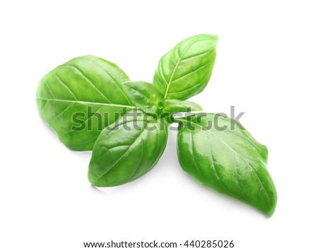 Basil leaves, isolated on white - stock photo
