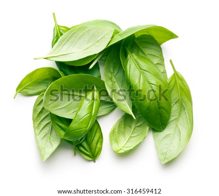 basil leaves on white background - stock photo