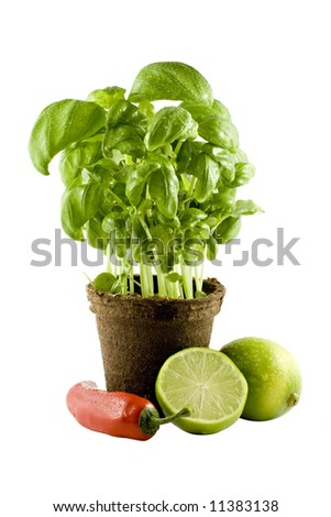 Basil, lime & chili isolated on white background - stock photo