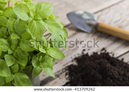 Basil plant with compost and trowel - stock photo