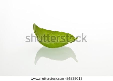 Basilicum leaf on white background - stock photo