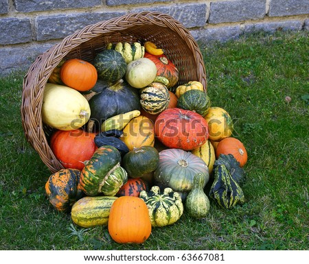 Basket and colorful pumpkins collection - stock photo