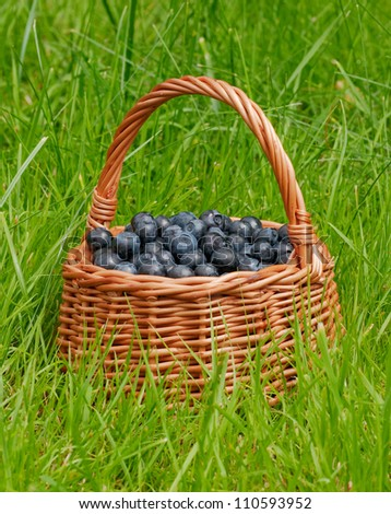 basket full of blueberries  on a green grass background