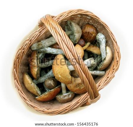 Basket full of mushrooms (fungi) on isolated background - stock photo