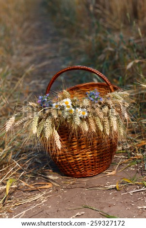 Basket full of ripe spikelets of wheat and wild flowers against natural background in the field. Harvest concept - stock photo