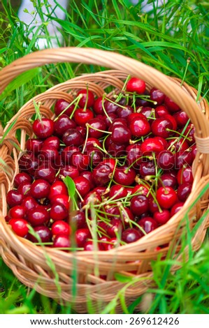 Basket of cherries on a green grass - stock photo