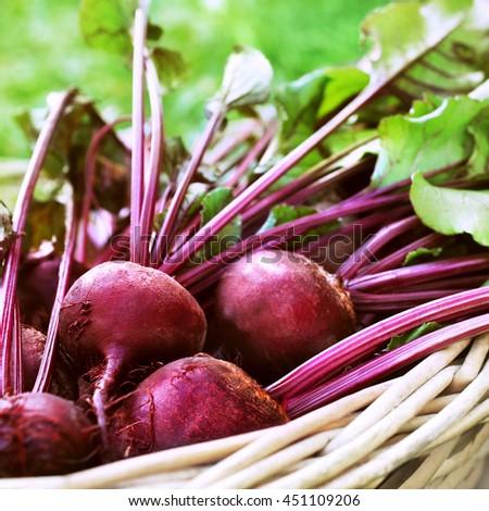 Basket of fresh harvested beetroots - stock photo