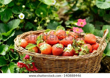 Basket of fresh strawberries - stock photo