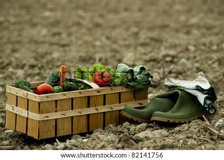 Basket of fresh vegetables on field - stock photo