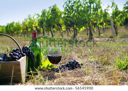 basket of grapes, glass and bottle of red wine