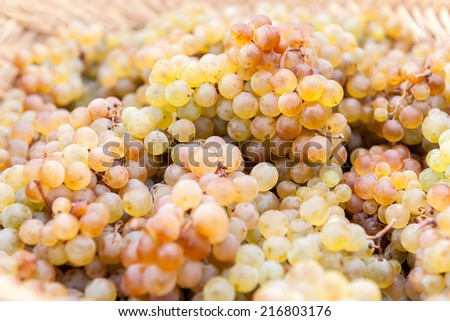 basket of grapes of different color and textures isolated - stock photo