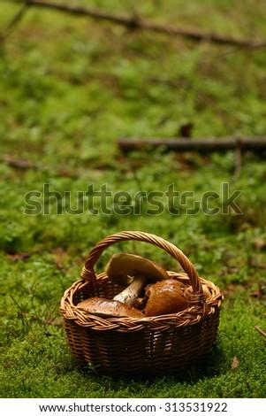 Basket of mushrooms  - stock photo