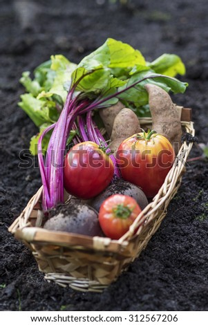 basket of organic vegetables from the garden - stock photo