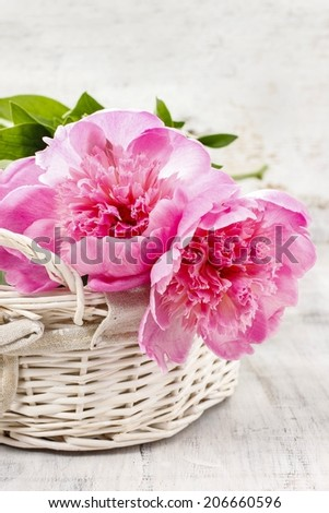 Basket of pretty pink peonies, white rustic background - stock photo
