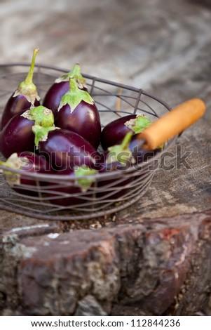 Basket of small eggplants - stock photo