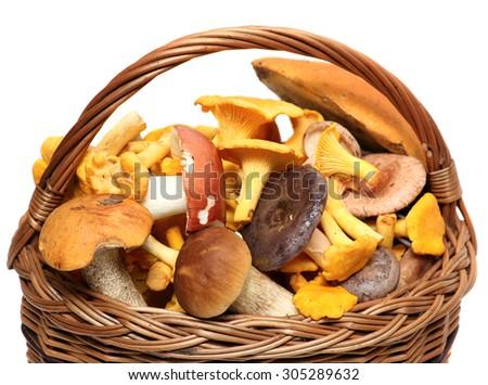 Basket of wild mushrooms isolated on white background. - stock photo