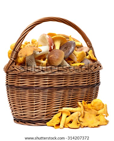 Basket of wild mushrooms isolated on white background. Wild Foraged Mushroom selection - stock photo