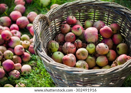 Basket with apple