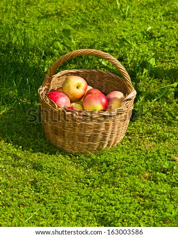 basket with apples on a grass - stock photo