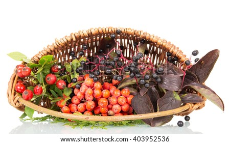 Basket with berries, rose hips, elderberry and rowan isolated on white background. - stock photo
