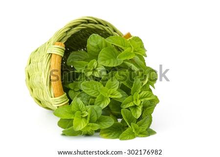 basket with fresh mint on white background - stock photo
