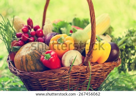 Basket With Fresh Organic Vegetables