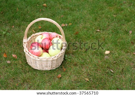 basket with fresh sweet apples on green grass - stock photo