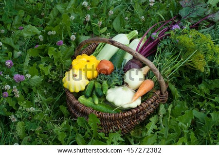 Basket with harvest on the grass background. Young carrots, beets, onions, colorful courgettes, cucumbers, tomatoes and other vegetables and herbs. Vegan concept. Summer season - stock photo