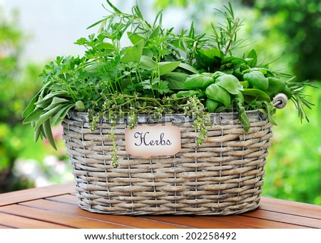 basket with herbs - stock photo