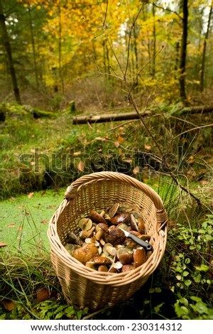 Basket with mushrooms in the autumn forest - stock photo