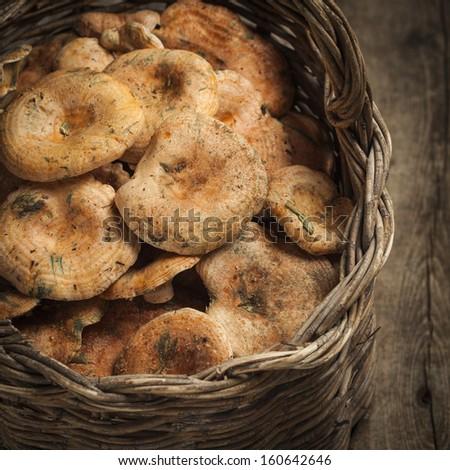 Basket with mushrooms (Lactarius deliciosus) - stock photo