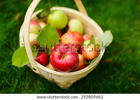 Basket with red organic apples on a grass - stock photo