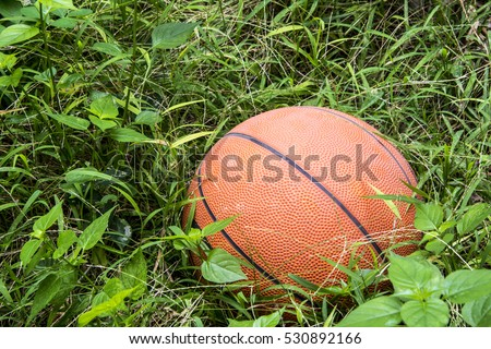 Basketball ball lying in a weed