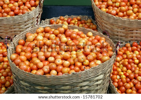 Baskets with tomato, harvest on the Inle lake, Shan State, Myanmar - stock photo