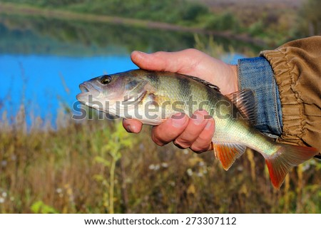 bass in the hand of fisherman against the river  - stock photo