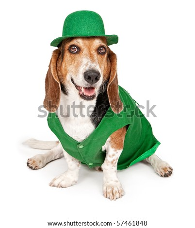 Basset Hound dog wearing green St. Patrick's Day outfit. Isolated on white - stock photo