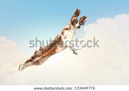 Basset hound flying between the clouds in the sky. funny collage - stock photo