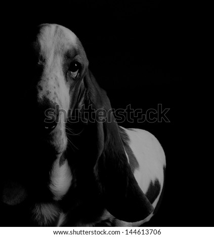 Basset Hound in the dark (in black-and-white, retro style)